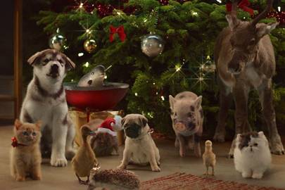 The McVities Christmas advert is ADORABLE
