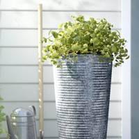 The plant pot