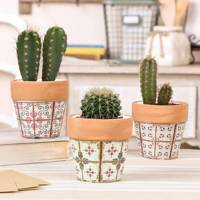 Best indoor plants: the plant pot set