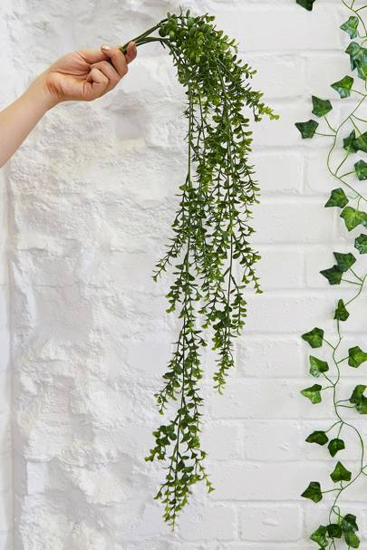 Best hanging plants: Urban Outfitters