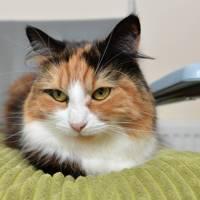 Most Caring Cat winner Tilly