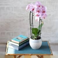 Best indoor plants: Orchid