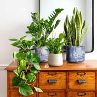 Best indoor plants: Peace Lily, Golden Pothos, Zamioculcas Zamiifolia & Sansevieria