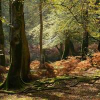 7. New Forest, Hampshire