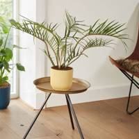 Best Low-Light Plants: Horsehead Philodendron