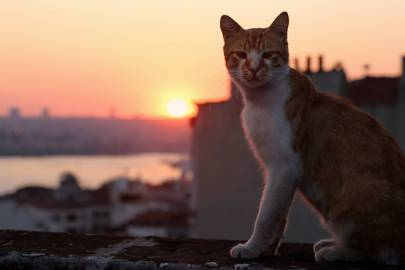 Kedi is the cat documentary of dreams
