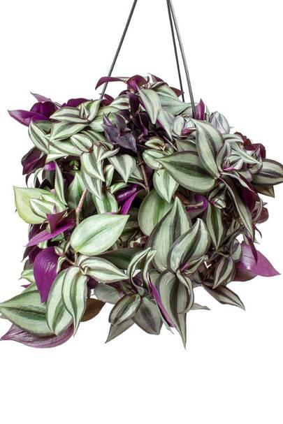 Best hanging plants: Hortology