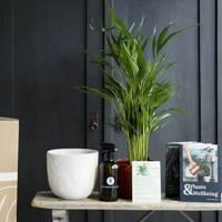 Best plant subscription box
