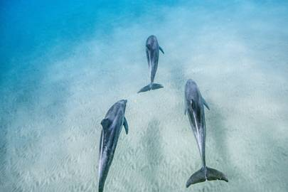 14. Dolphin Reef