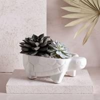 Ceramic turtle planter