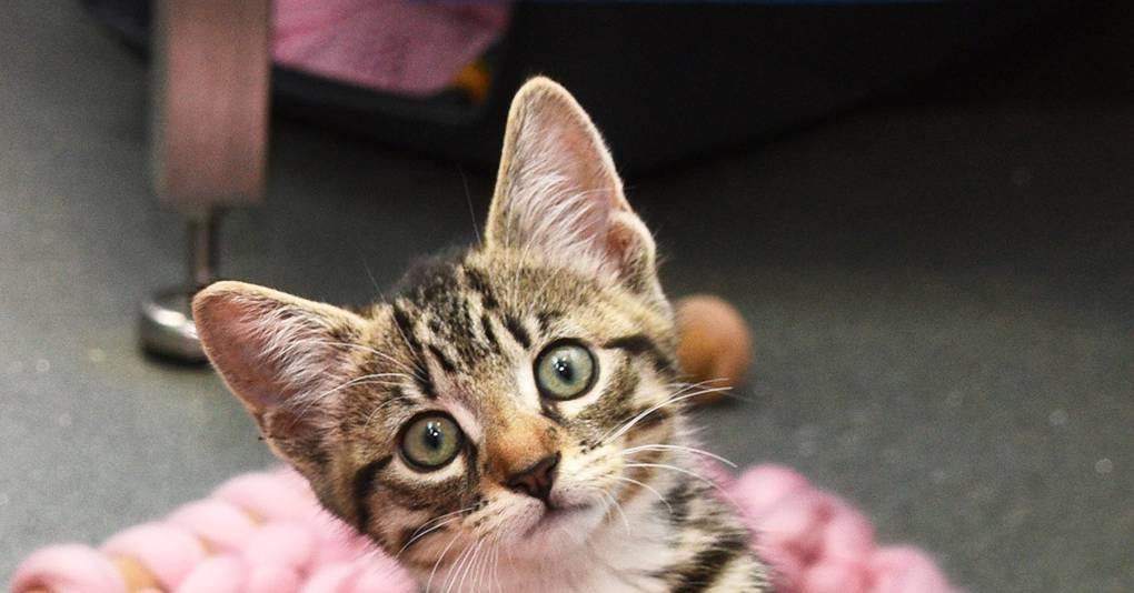 Knitting Kittens At Battersea Dogs Amp Cats Home Awesome