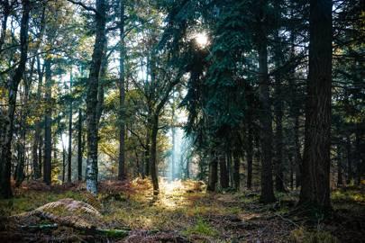 9. UK Weekend Breaks: New Forest