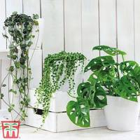 Best indoor plants: the air-purifying houseplants