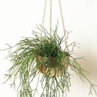 Best hanging plants: Oliver Bonas