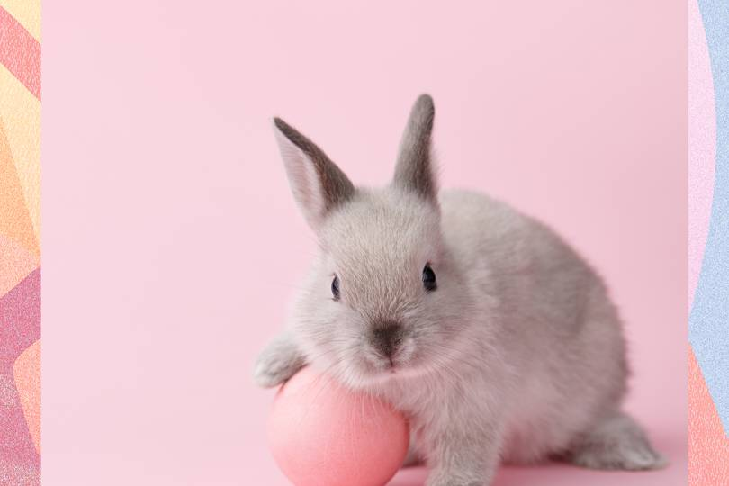 California Has Banned Products Tested On Animals Glamour Uk