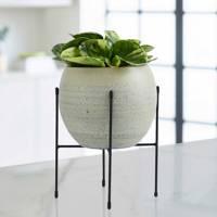 Best indoor plants: Peperomia
