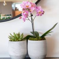 Best get well soon gifts: The orchid and succulent duo