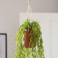 Best hanging plants: Next