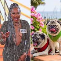 Sandi Bogle 44k on Twitter v Minnie & Max 106k on Instagram
