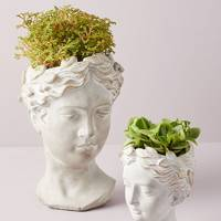 Best indoor plants: the bust plant pot