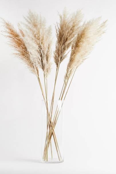 Dried flowers: pampas grass