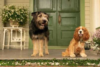17. Lady and the Tramp (2019)