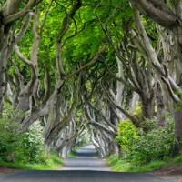 Northern Ireland: The Dark Hedges, Ballymoney