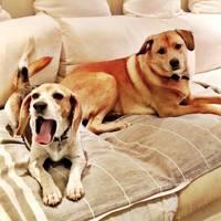 Ellen DeGeneres convinced her to adopt her dog