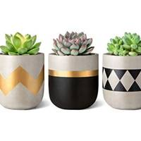 Amazon Christmas gifts: the planters