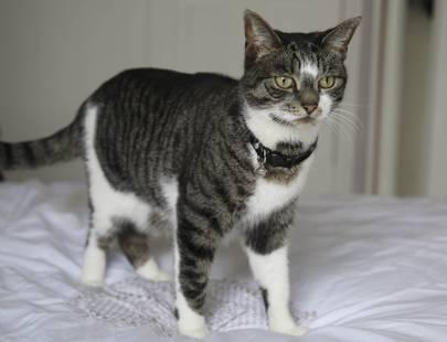 Hero Cat winner Pixie