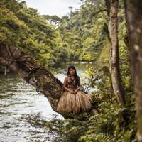 Amazon Rainforest, Ecuador