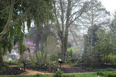 Chelsea Physic Garden, Chelsea