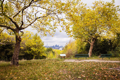 One Tree Hill, Honor Oak