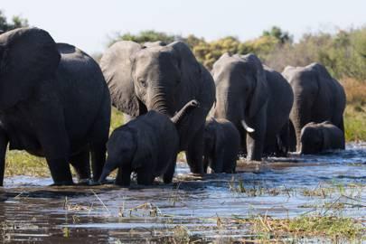 6. Elephant