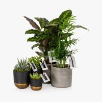 Unusual gifts: the indoor plants