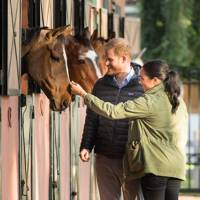An equestrian visit in Morocco (February 2019)