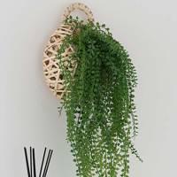Best hanging plants: Dunelm