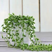 Best Low-Light Plants: Senecio 'String of Pearls'