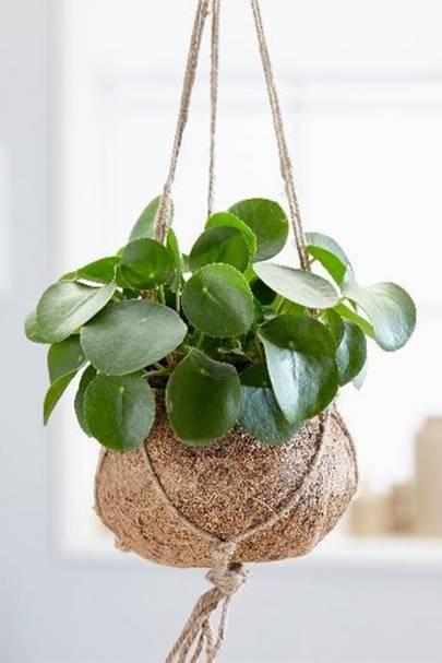 Best hanging plants: Waitrose Garden