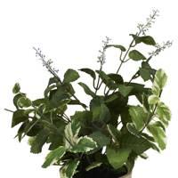 Faux flowering herb