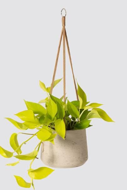 Best hanging plants: Patch Plants
