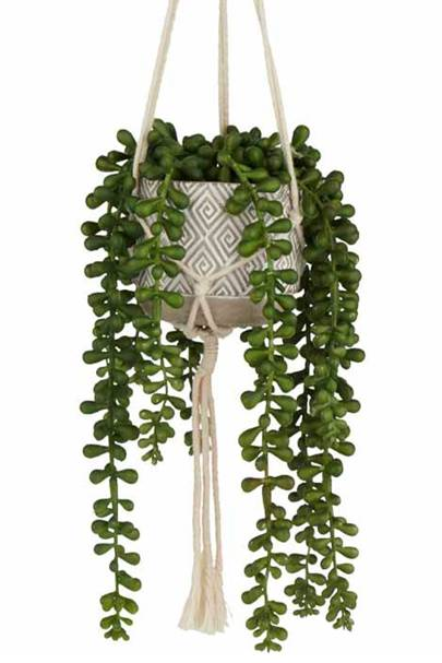 Best hanging plants: Wilko