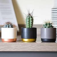 Best Low-Light Plants: Cacti