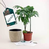 Unusual birthday gifts for her: the indoor plant subscription