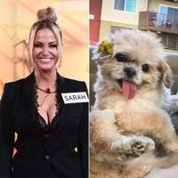 Sarah Harding- 71k Instagram followers vs Marnie the dog- 2.1m Instagram followers
